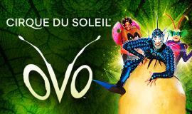 Cirque Du Soleil- Ovo